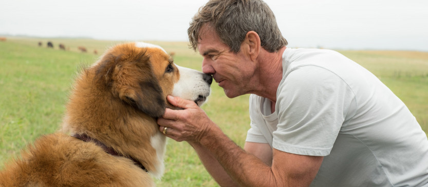"""A Dog's Purpose"" Film and Blu-Ray, DVD, and Digital HD Combo Pack Review"