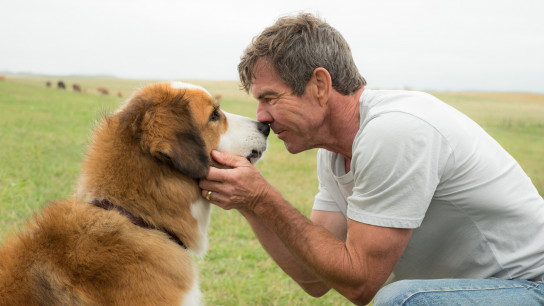 A Dog's Purpose (2017) Image