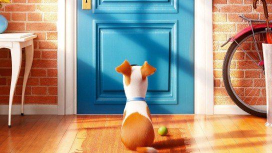 The Secret Life of Pets (2016) Image
