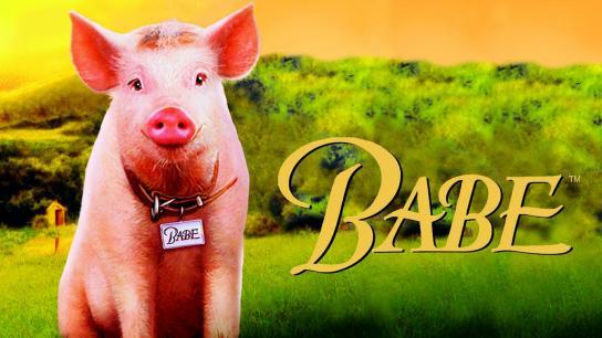 Babe (1995) Image
