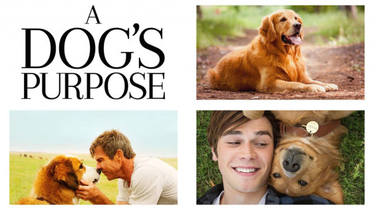 A Dog's Purpose (2017) Image