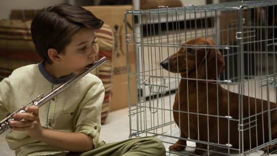 Wiener-Dog (2016) Image