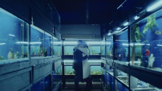 Little Fish (2021) Image