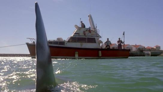 Shark Attack 2 (2001) Image