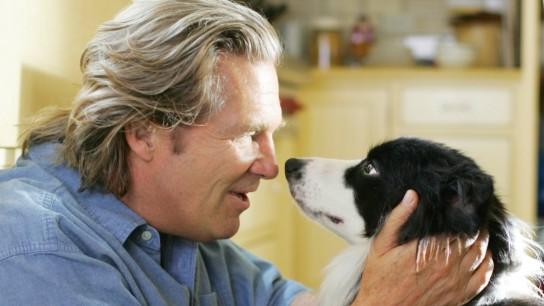 A Dog Year (2007) Image