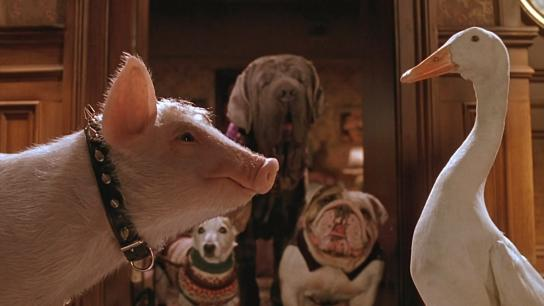 Babe: Pig in the City (1998) Image