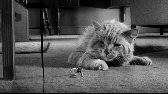The Incredible Shrinking Man (1957) Image