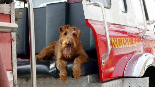 Firehouse Dog (2007) Image