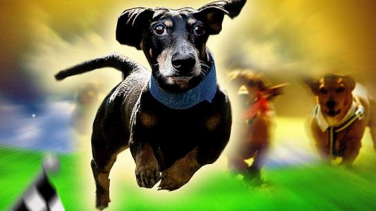Wiener Dog Nationals (2013) Image