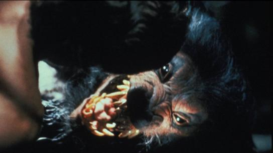 Howling V: The Rebirth (1989) Image