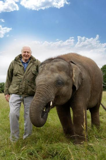 Attenborough and the Giant Elephant (2017)